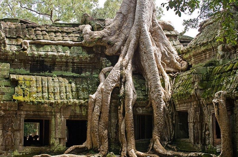 Temple in Ta Prohm